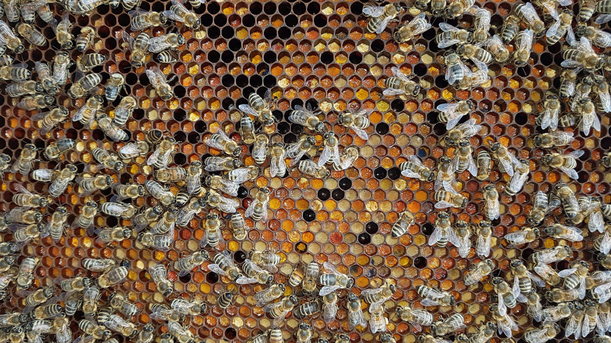 PollenPic